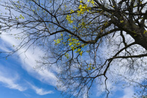 May 20 – new leaves