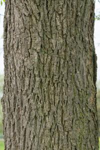 May 25 – close vertical bark